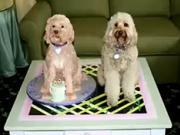 Pes z marcipánu - jak vyrobit  psa z marcipánu