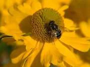 Sázení květin - jak přesazovat kvetoucí rostliny