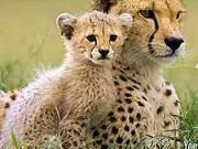 Focení divoké zvěře - jak fotit divokou zvěř - fotografování přírody