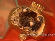 Miniaturní betlehémm v makovici