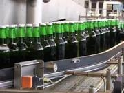 Jak se dělá pivo Budvar přímo v pivovaru