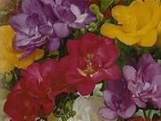 Jarní cibuloviny - jak sázet okrasné cibuloviny - narcisy, tulipány, krokusy