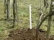 Sázení révy - Jak sázet révu