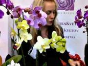 Orchidea - jak pěstovat orchideu