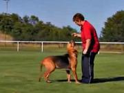 Vycvik psa - povel