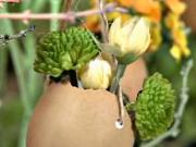 Vázičky z vaječných skořápek