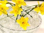Květinová dekorace - jarní dekorace z narcisů