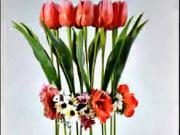Jarní tulipánová dekorace - Květinová dekorace