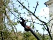 Stříhání ovocných stromů - jak správně stříhat ovocné stromy