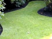 Založení trávníku - setý trávník