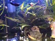 Filtrace vody v akváriu - Jak zlepšit filtraci vody v akváriu