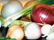 Sázení cibule - jak sázet cibuli -výsadba cibule