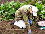 Sázení česneku - výsadba česneku - jak sázet česnek