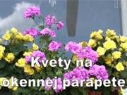 Květiny na parapetu - jak naaranžovat květiny na parapetu
