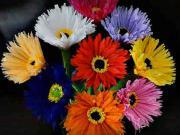 Květy z papíru - jak vyrobit papírové květiny