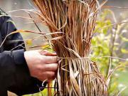 Jak zazimovat okrasné trávy - zazimování okrasných trav