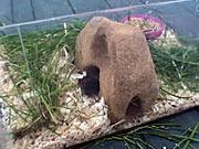 Domeček pro myš