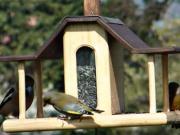 Vtáčie krmítko - krmítko pro vtáky