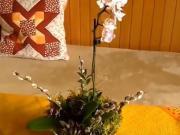 Aranžmá s orchidejí