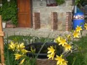 Kuchyně na záhradě