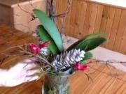 Jak naaranžovat orchideu